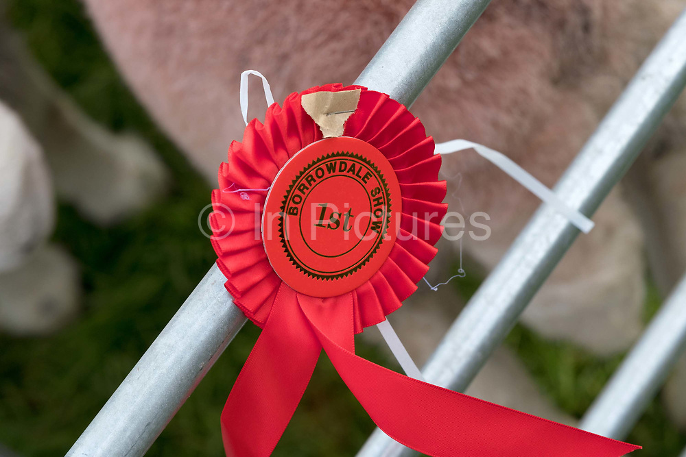 First prize rosette at Borrowdale Shepherds Meet in Rosthwaite village, Cumbria on 16 September 2018. Herdwick sheep are the native breed of the central and western Lake District and live on the highest of England's mountains. They are extremely hardy and are managed in the traditional way on the Lake District fells that have been their home for generations.