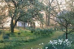 The orchard at Sissinghurst Castle Garden on a misty morning in spring