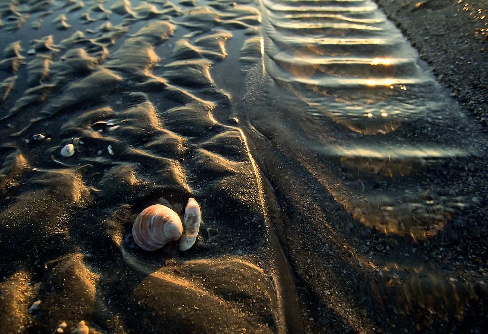 Low tide along a South Carolina island.