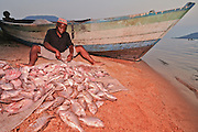 A fisher prepares his catch for market at Cape Maclear, Lake Malawi, Malawi.