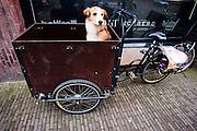Een hond wacht geduldig in een bakfiets