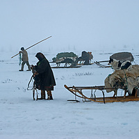 North of the Arctic Circle in Russia, 77-year old Marie Terentéva, a nomadic Komi reindeer herder, prepares one of her sleds for migration, while another herder goes to fetch the animals.