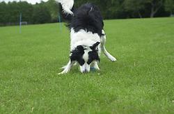 Eddie Sander with his Dogs Jackson and Inka<br /><br />18 June 2004<br /><br />Copyright Paul David Drabble<br /> [#Beginning of Shooting Data Section]<br />Nikon D1 <br /> Focal Length: 50mm<br /> Optimize Image: <br /> Color Mode: <br /> Noise Reduction: <br /> 2004/06/18 09:55:40.3<br /> Exposure Mode: Manual<br /> White Balance: Auto<br /> Tone Comp: Normal<br /> JPEG (8-bit) Fine<br /> Metering Mode: Center-Weighted<br /> AF Mode: AF-C<br /> Hue Adjustment: <br /> Image Size:  2000 x 1312<br /> 1/400 sec - F/4<br /> Flash Sync Mode: Not Attached<br /> Saturation: <br /> Color<br /> Exposure Comp.: 0 EV<br /> Sharpening: Normal<br /> Lens: 50mm F/1.8<br /> Sensitivity: ISO 200<br /> Image Comment: <br /> [#End of Shooting Data Section]