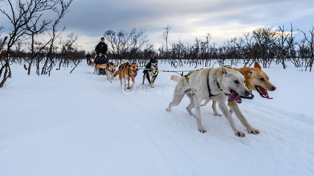 Dog sledding in Nesseby, Varanger, Finnmark, Norway in March.