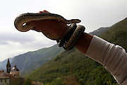 Holding a snake during the snake Procession of Cocullo, one of the oldest pagan Christian celebrations still held today in Italy, on Thursday, May 5, 2005. Saint Domenico, the peculiar Saint of the event, was thought to protect from and heal snake bites. **ITALY OUT**