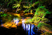 A little forest stream is lit up by a patch of sunlight in the dark forest