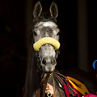 Thoroughbred Racing 2013 - Gallery 02