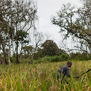 16th of October 2013, a man who fled his village because of the violence carried Kony's Lord Resistance Army (LRA) has taken refuge in a field a few kilometers away from Obo (East of Central African Republic). Him and 60 other people have organized themselves in the middle of a forest to produce and sell Sorgo, Maize, corn or various fruits.
