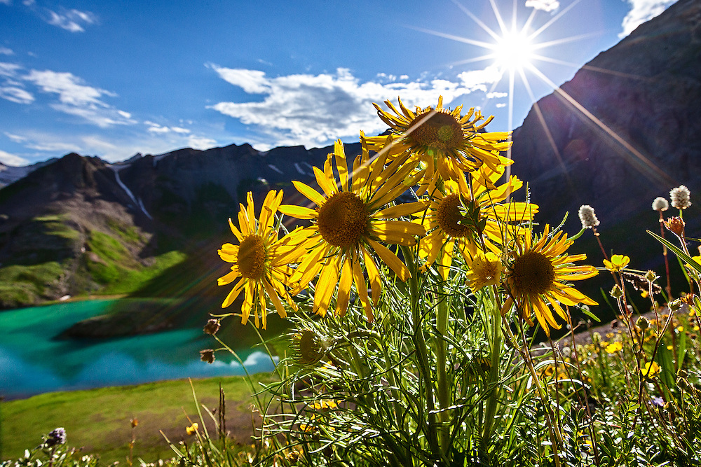 A sunburst mimics the radiant pedals of the flowers.