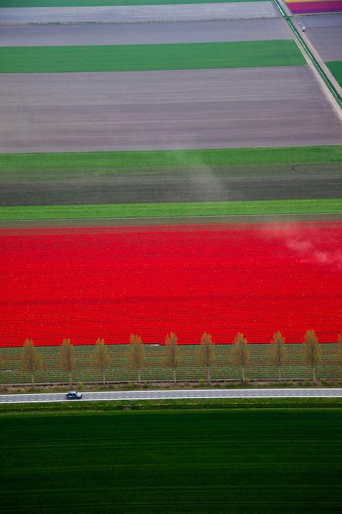 Nederland, Flevoland, NOP, 28-04-2010; bloembollenvelden in de Noordoostpolder, omgeving Creil, voornamelijk tulpen. De polder is een relatief jonge bollenstreek, gekenmerkt door grootschalige teelt. .Flower fields in the Northeast Polder, mostly tulips. The polder is a relatively young bulb region, and can be characterized by its widespread cultivation..luchtfoto (toeslag), aerial photo (additional fee required).foto/photo Siebe Swart