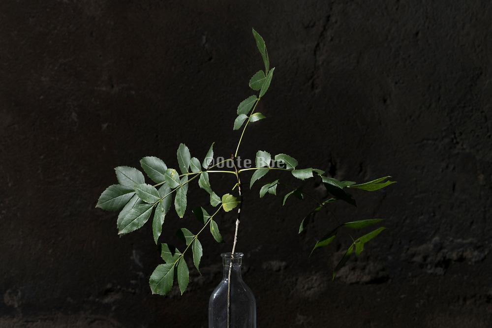 tree twigs as a bouquet still life
