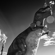 Mr. Tiny Hands With Flare - Cabazon, CA - Infrared Black & White