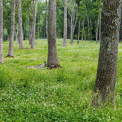 Wooded pasture at Clarke Farm, Epping, New Hampshire.