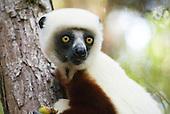 Madagascar Stock Photography