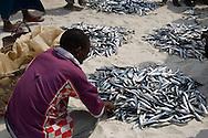 Fish being sold on the beach in Nungwi, Zanzibar, Tanzania