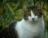 Neighborhood Cat. Image taken with a Nikon N1V3 camera and 70-300 mm  VR lens