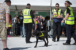 © Licensed to London News Pictures .06/06/2015. Manchester , UK.  Drug sniffer dog at one of the entrances . Early arrivals at The Parklife 2015 music festival in Heaton Park , Manchester . Photo credit : Joel Goodman/LNP