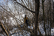 A migrants is seen carrying some food he collected from some volunteers in his makeshift shelter in a wood next to the town of Bihac, many are living in miserable condition in the outskirts of the town. Bihac, Bosnia and Herzegovina, January 27, 2021