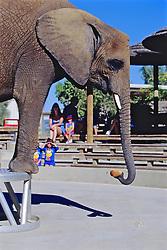 Elephant Picking Up Bread