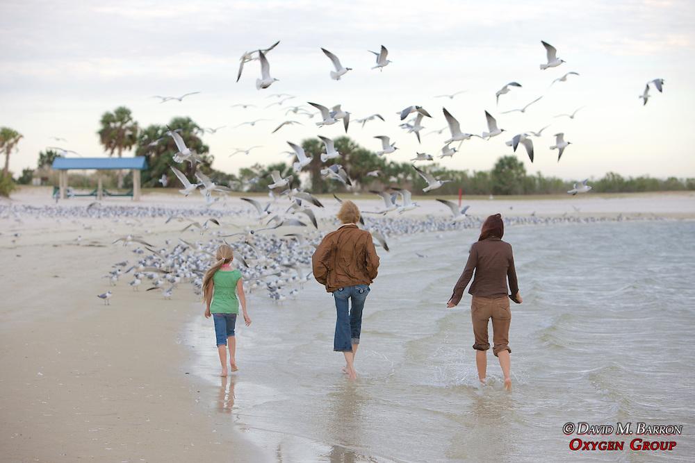 People & Laughing Gulls