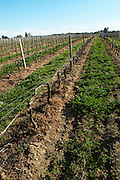 vineyard chateau reysson haut medoc bordeaux france