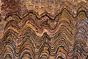 Fossil of agal stromatolites which are colonies of blue-green algae and cyano-bacteria, and are the Earth's oldest living life forms (dated 2.2 to 3.2 billion years ago)
