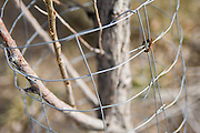 A short fence surrounds and protects a planted tree sapling at Lockwood, near Reno, Nevada. The site is one of three properties so far being restored in a $20 million effort by the Nature Conservancy to revitalize the Lower Truckee River ecosystem.