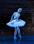 2/25/2008 -- GASTON DE CARDENAS/EL NUEVO HERALD -- Hayna Guiterrez as Odette as Prince Siegfried in Cuban Classical Ballet's production of Tchaikovsky's Swan Lake at the Jackie Gleason Theater of the Performing Arts.