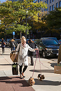 Stylish local woman walking two Yorkshire Terrier dogs on leads and carrying shopping bags in Newbury Street, Boston, USA