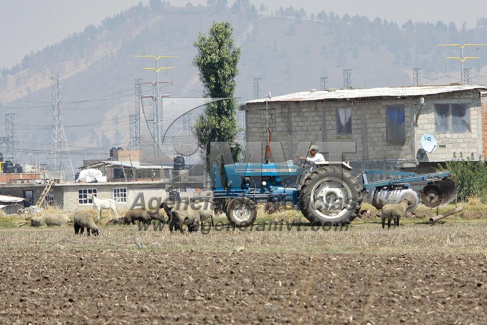 TOLUCA, México.- En algunas zonas de la ciudad de  Toluca se siguen llevando a cabo actividades propias del campo, como el cultivo de la tierra y el cuidado de ganado. Agencia MVT / Crisanta Espinosa. (DIGITAL)