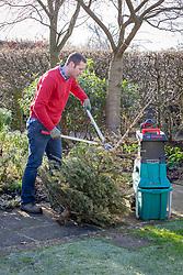 Recycling a Christmas tree by shredding it