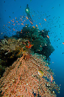 A diver hovers above a reef in Bali, Indonesia.