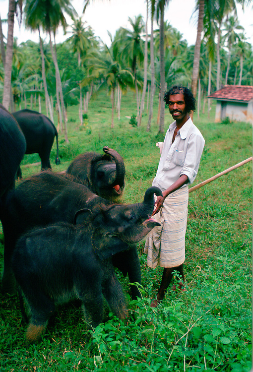 Man looking after baby elephants at an elephant orphanage near Kandy in Sri Lanka