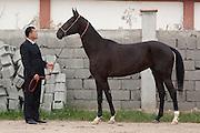 Breeder Ovlakuli Sharipov displays an Ahal Teke horse at his yard in Ashgabat, Turkmenistan.