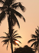 The sun goes down behind palm trees in the Keralan Backwaters in India