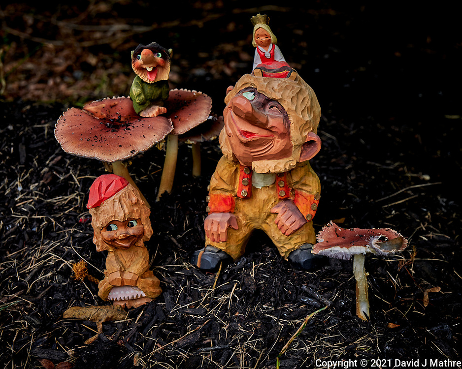 Troll Family Autumn Mushroom Harvest Celebration. Image taken with a Leica S2 camera and 24-90 mm lens.