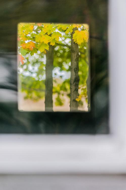 Autumn maple tree framed by a soft focus window frame, overcast light, October, Eckhert Farm, Port Oneida Rural Historic District, Sleeping Bear Dunes National Lakeshore, Michigan, USA