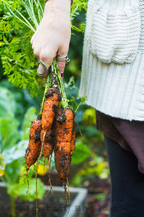 Just pulled carrots out of the garden.