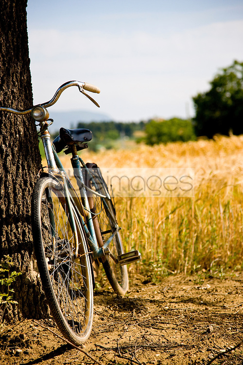 Bicycle leaning on a tree next to sundrenched wheat field