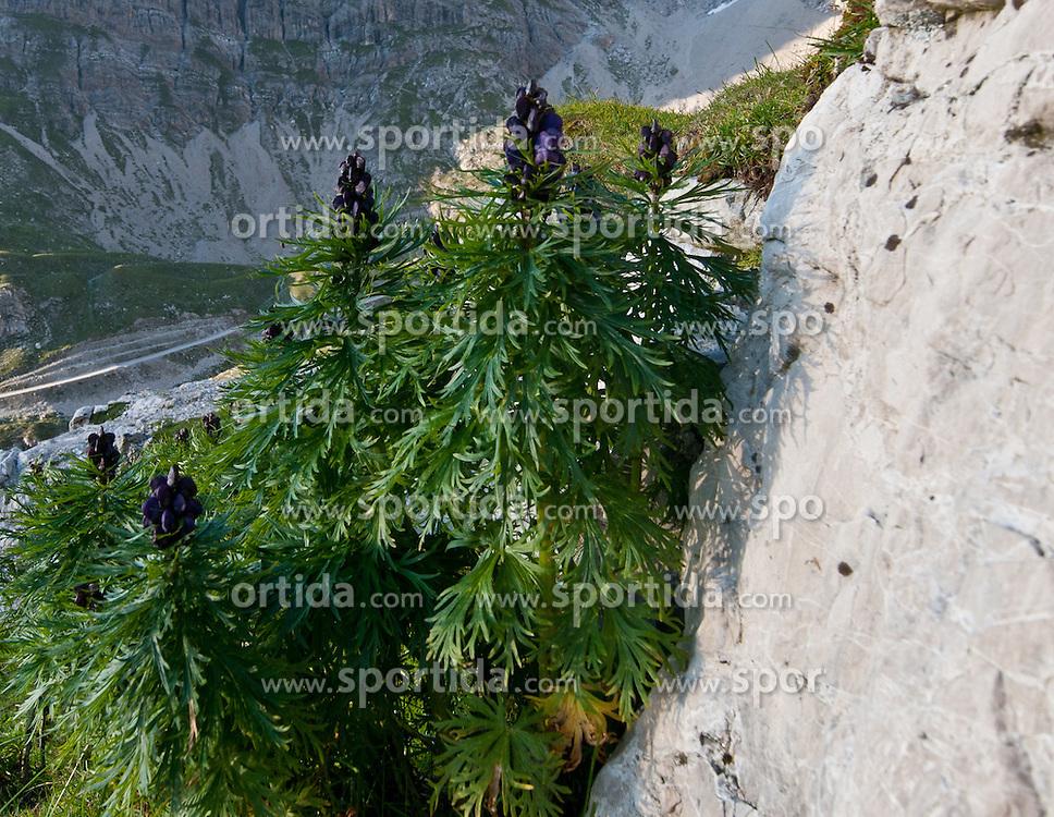 THEMENBILD - Sonnenuntergang am Laserz, Eisenhut Aconitum napellus, Lienzer Dolomiten, AUT, EXPA Pictures © 2011, PhotoCredit: EXPA/ M. Gruber
