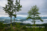 66745-05003 Early morning fog along Foothills Parkway Great Smoky Mountains National Park TN