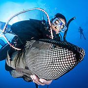 Nassau Grouper - Critically Endangered Icon
