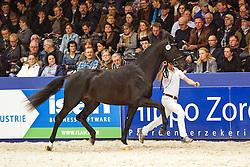 495 - Guess<br /> KWPN Stallion Selection - 's Hertogenbosch 2014<br /> © Dirk Caremans