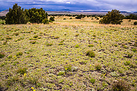 Short grass prairie of northeastern New Mexico.  Near Capulin Volcano  National Monument.