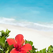 Hibiscus on balcony overlooking the beach. Cancun, Quintana Roo. Mexico Red flower overlooking the beach of Cancun.