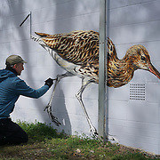Endangered 13 live paintings of animals