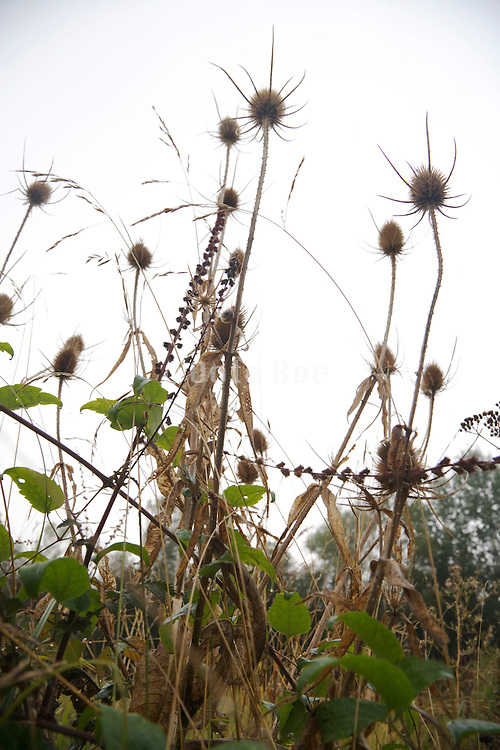 close up of roadside scrub with thistles in early fall season