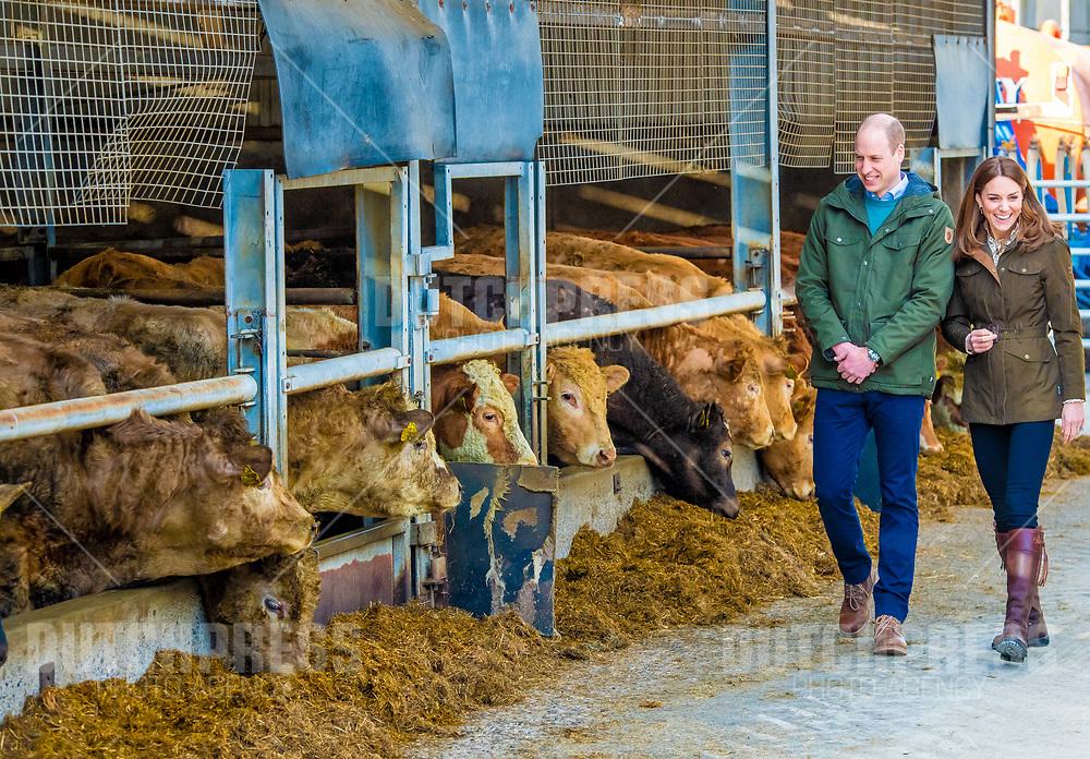COUNTY MEATH - Prins William en Catherine, Hertog en Hertogin van Cambridge bij een bezoek aan Research Farm,<br /> County Meath, op de tweede dag van hun drie-daags bezoek aan Ierland.