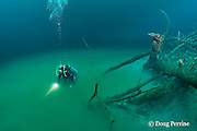 scuba diver with lower body vanishing into foggy layer of hydrogen sulfide that blankets the halocline at 30m depth like a toxic river, in  Cenote Angelita, near Tulum, Yucatan Peninsula, Mexico