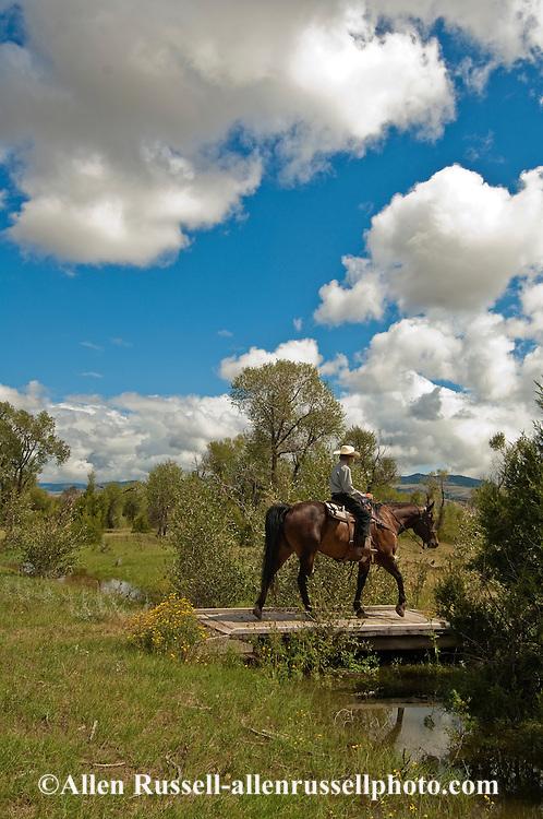 Trail Riding, Teenager, boy, Quarter Horse, Montana
